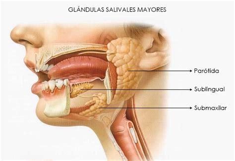 Cáncer de las glándulas salivales y síntomas » Sintomas ...