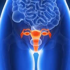 Cáncer de útero: MedlinePlus en español