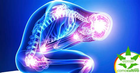 Cannabis medicinal para la fibromialgia | CómoCultivo.com