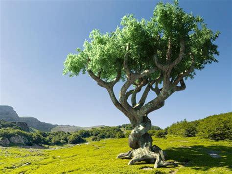 Canto al árbol