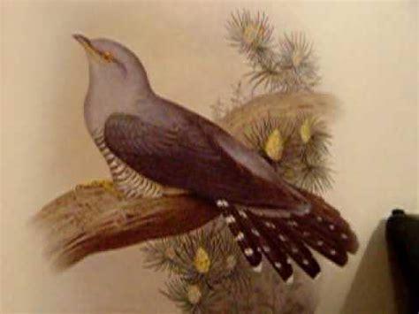 Canto de pájaros   Abejaruco | Doovi