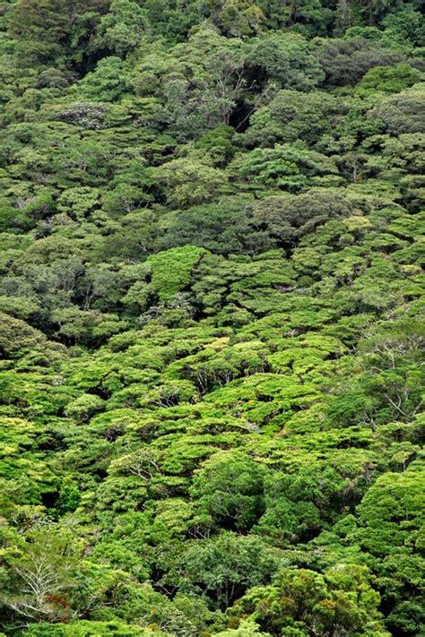 Cantón de Limón – Guías Costa Rica