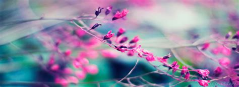 capa-flor-linda-facebook - fotos de capa™