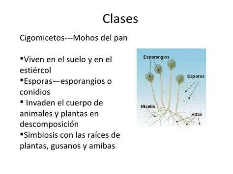 Características de hongos