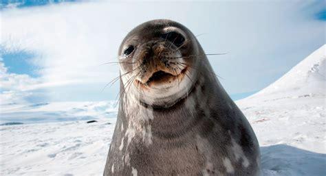 Características de las focas