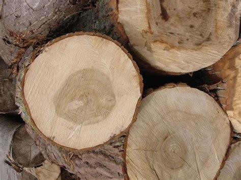 Características de las maderas blandas - Carpintero Badalona