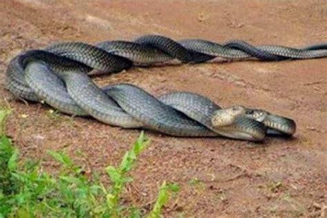 Características de las serpientes - Cómo es, qué come y ...