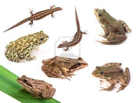Características de los animales… | Descubriendo la Ciencia ...