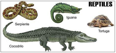 Caracteristicas de los Reptiles Reproducción Respiración