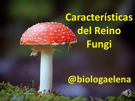 Características del Reino Fungi   Los Hongos   YouTube