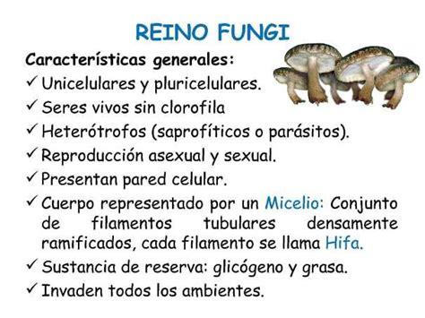 Características del reino fungi   Reino fungi