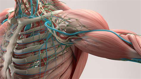 Características y funciones específicas del músculo ...