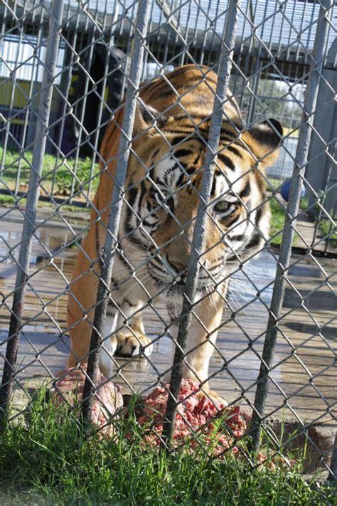 care2 | Free Tony The Tiger