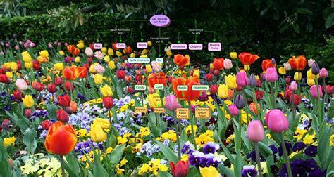 Carla medrano La plantas y flores 2