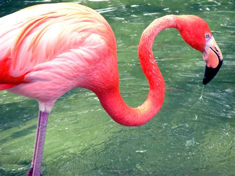 Carly Altree-Williams: Inspiration: Flamingo's