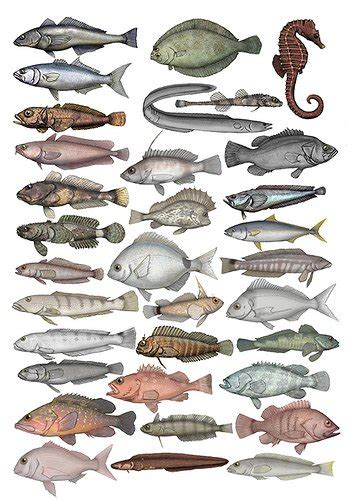 Carnada para peces de rio mar y lago   Recetas y Cocina ...