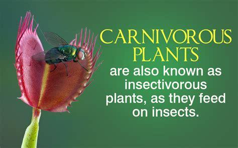 Carnivorous Plants Information