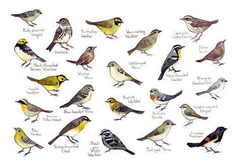 Carolina Warblers Bird Field Guide Style by KateDolamore ...