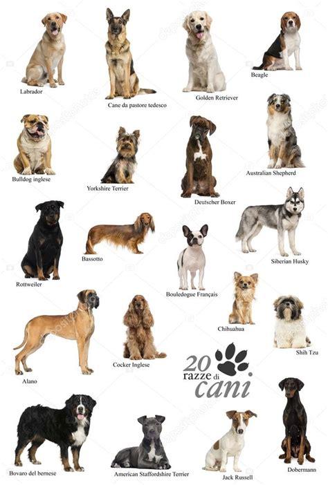 cartel de razas de perro en Italiano — Fotos de Stock ...