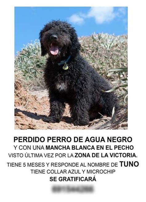 Cartel perro perdido | Notas de Mascotas