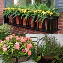 casas, cocinas, mueble: Plantas de maceta para exterior