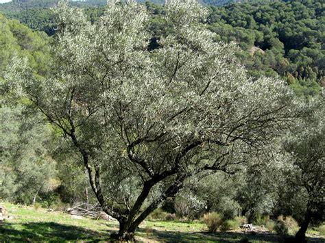 Catálogo de flora autóctona