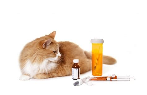 Cats and Human Medications, Dog Treatments in Cats ...
