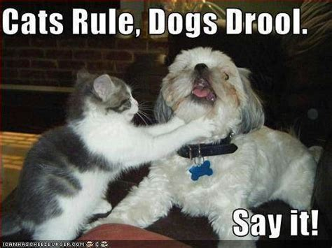 Cats Rule, Dogs Drool | Bad kitty | Pinterest