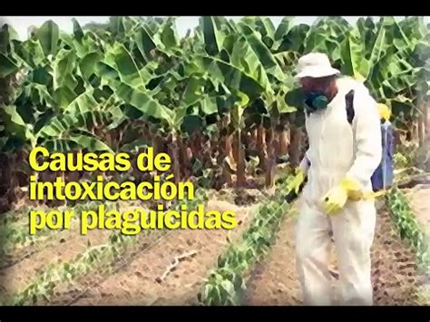 Causas de intoxicación por plaguicidas en el municipio de ...