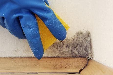 Causas del moho en paredes   CanalHOGAR