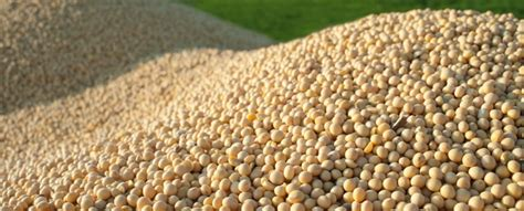 CBOT Review: Soybeans down with profit taking   The only ...