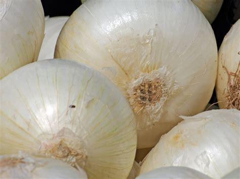 Cebolla, promisoria contra la diabetes