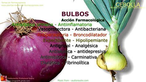 Cebolla. Propiedades y beneficios. usos medicinales - YouTube
