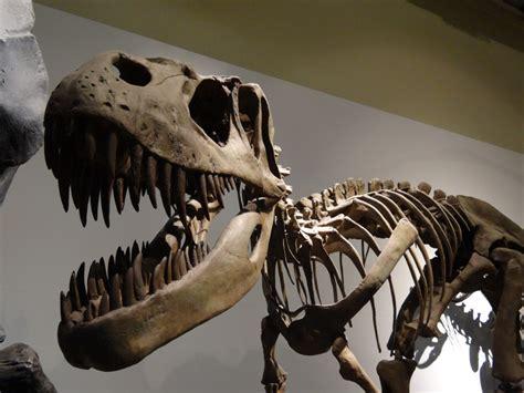 Celebra el Día del Padre en el Museo de Ciencias Naturales ...