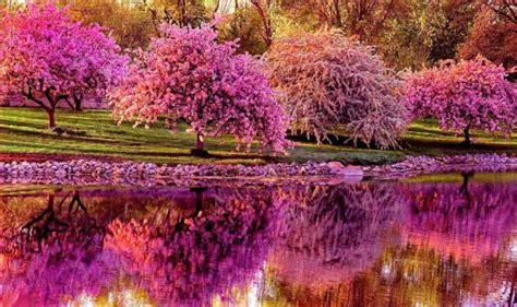 Celebra la llegada de la primavera con estos fondos de ...