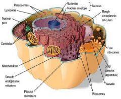 Celula Procariota y Celula eucariota Tarjetas de ...