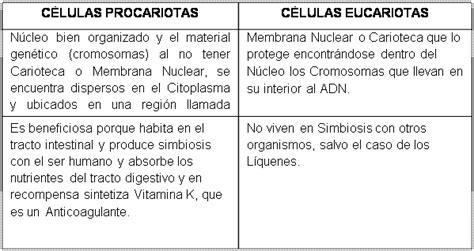 Células ecucariotas y procariostas - Monografias.com