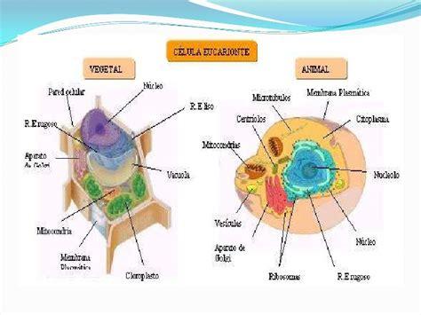 Celulas Euca Y Procariontes