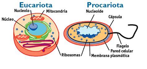 Células Procariotas e Eucariotas: Semelhanças entre elas