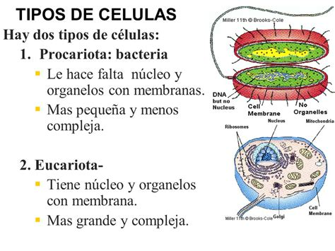 CELULAS Y Viruses. - ppt descargar