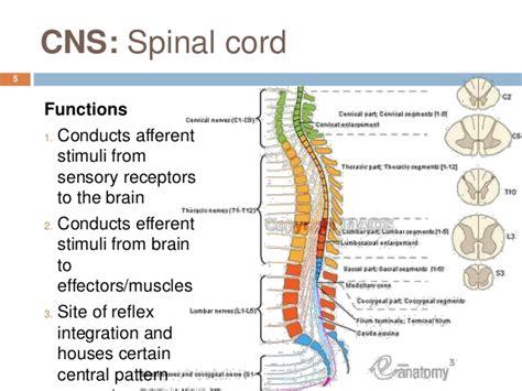 Central Nervous System Quotes. QuotesGram