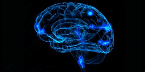 cerebro gif 6 | GIF Images Download