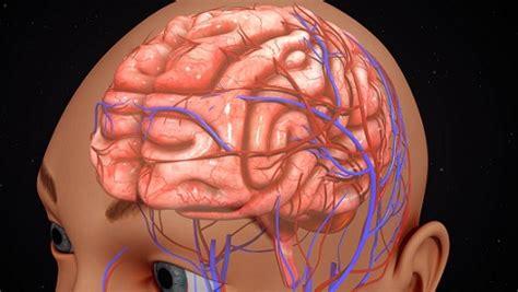 Cerebro Humano: Funciones y Partes (con Imágenes)