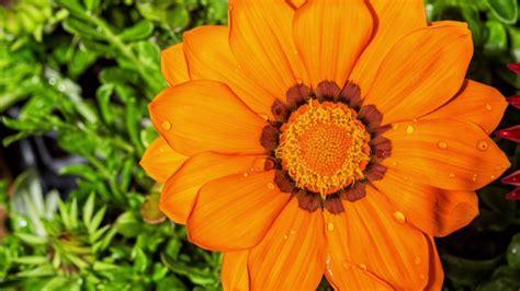 Cerjardin Garden, el vivero de plantas y flores mas bonito ...