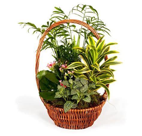 cesta planta verde precios comprar cesta planta verde ...