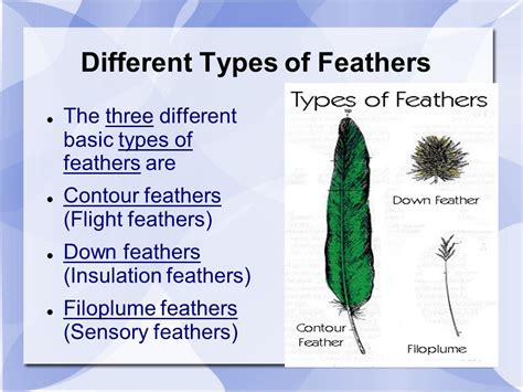 Chapter 19 and 20 Notes, Birds and Mammals - ppt video ...