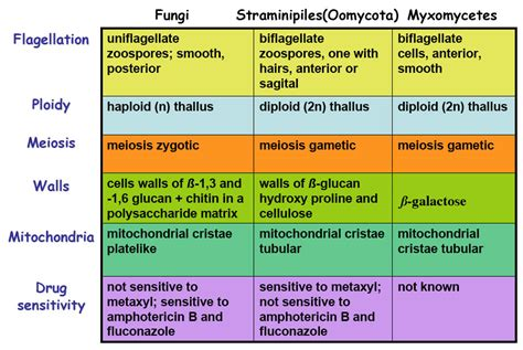 Characteristics of Fungi | Mycology - All you need to know