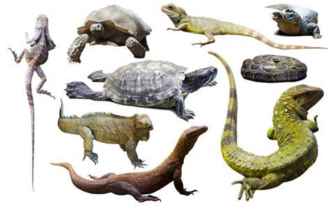 Characteristics of reptiles, Animals, Amphibians, Reptiles ...