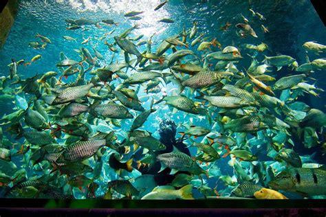 Chiang Mai Zoo Aquarium in Chiang Mai   Attraction in ...