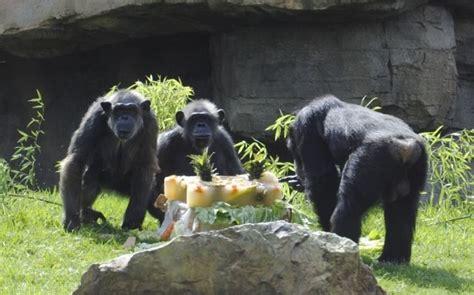 Chispi cumple 25 años rodeada de su familia, con una tarta ...